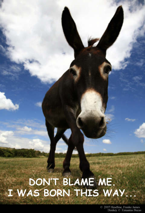 Headline franke james, donkey photo licensed from istock